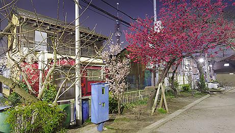 Tokyo. Mar.28, 2011